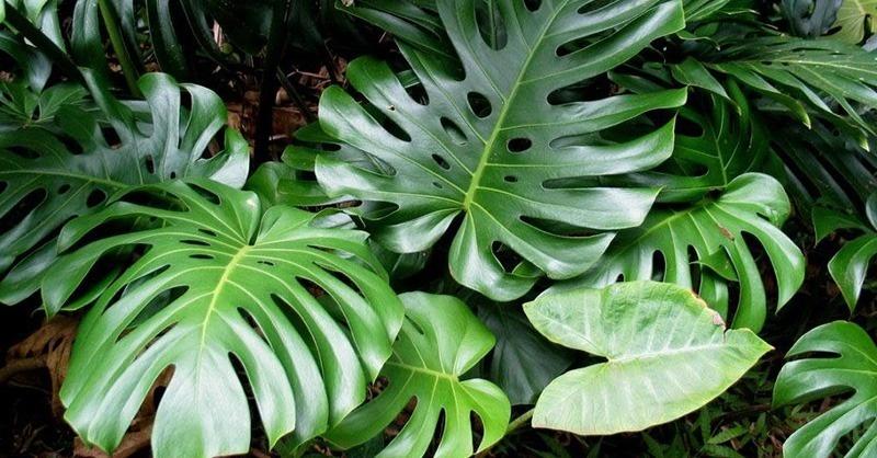 Növényekkel egészségesebb lehet a mikrokörnyezetünk