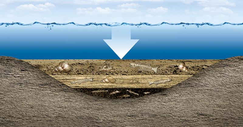 Tudja-e, hogy jött létre a kőolaj és a földgáz?